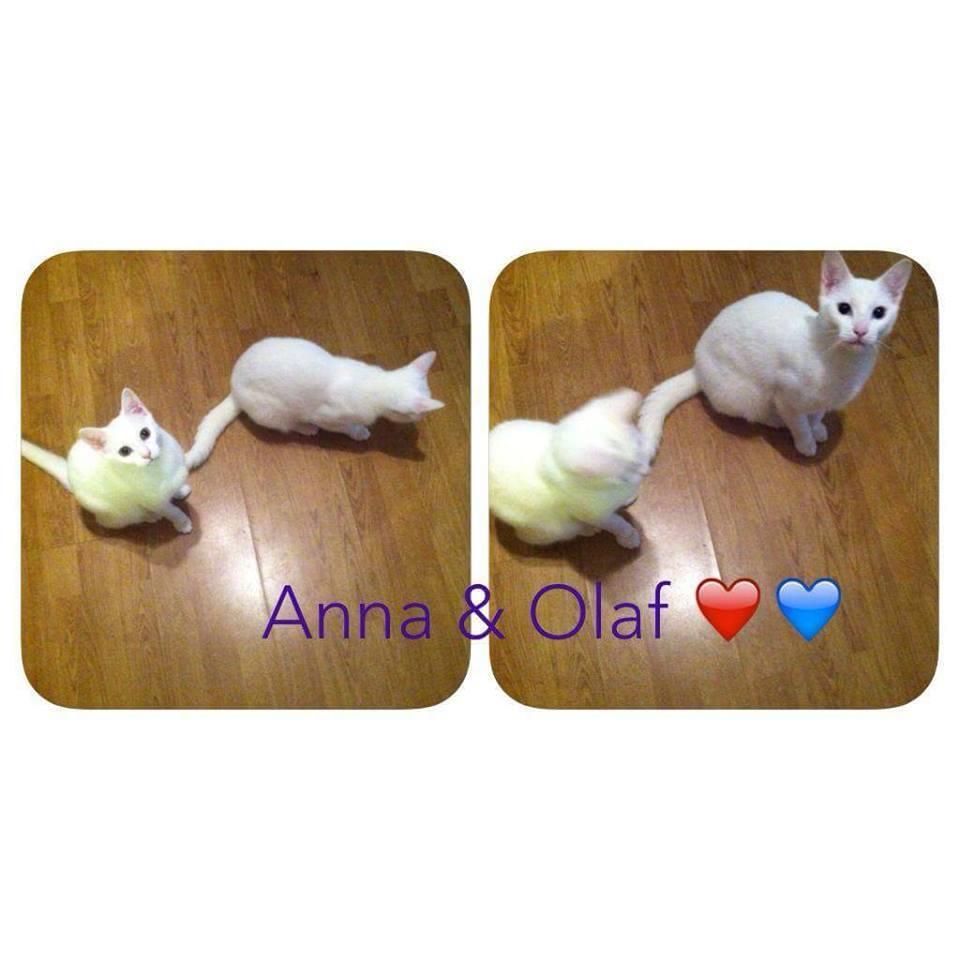 Anna og Olaf