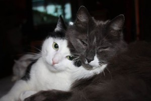 Hoppsan og Heidi Thereses private katt Fant