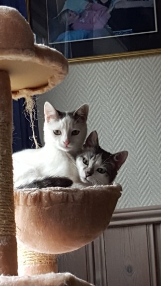 Tuppen og Lillemor 3