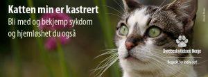 Bli med og bekjemp sjukdom og heimlaushet blant katt – kastrer, vaksiner og id-merk katten din!