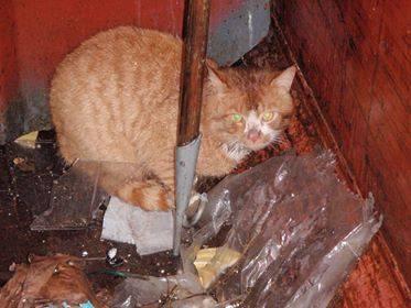 container-katten-vidar