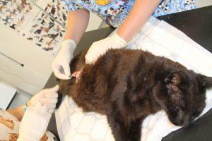 Dyrebeskyttelsen har store veterinærutgifter. Vil du hjelpe? Kontonummer 3720.14.98210
