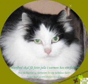 Har du hus- og hjerterom til ein heimlaus katt? Bli forvert, ta kontakt!