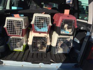 Vi treng fleire frivillige sjåførar og hjelparar over heile fylket, kontakt oss på post@dyrebeskyttelsen-sfj.no