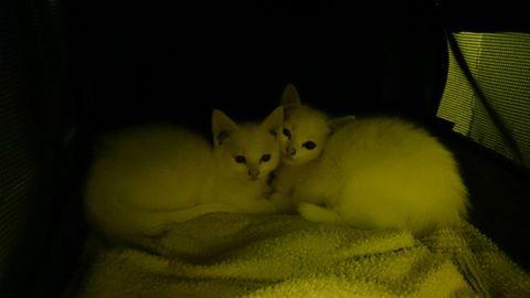 to små på veg til et nytt og bedre liv