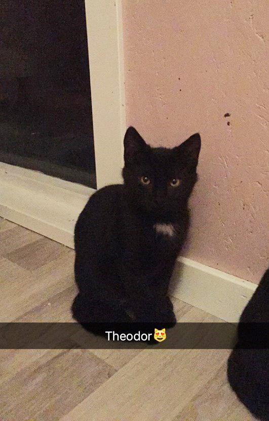 Theodor 5