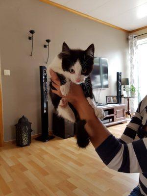 Kattunge fra Dale i S. 1. august
