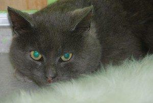 Kattefaren-300x201(1)