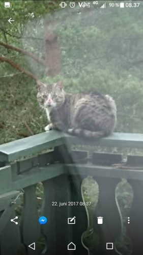 Tonheim katten